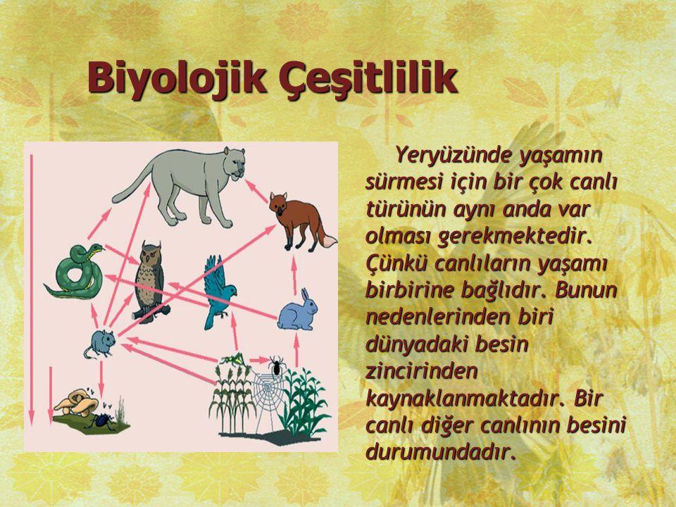 Biyolojik Çeşitlilik Yeryüzünde yaşamın sürmesi için bir çok canlı türünün aynı anda var olması gerekmektedir. Çünkü canlıların yaşamı birbirine bağlı