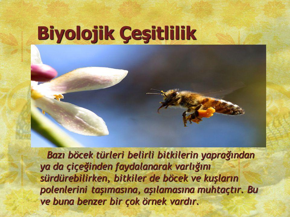 Biyolojik Çeşitlilik Bazı böcek türleri belirli bitkilerin yaprağından ya da çiçeğinden faydalanarak varlığını sürdürebilirken, bitkiler de böcek ve k