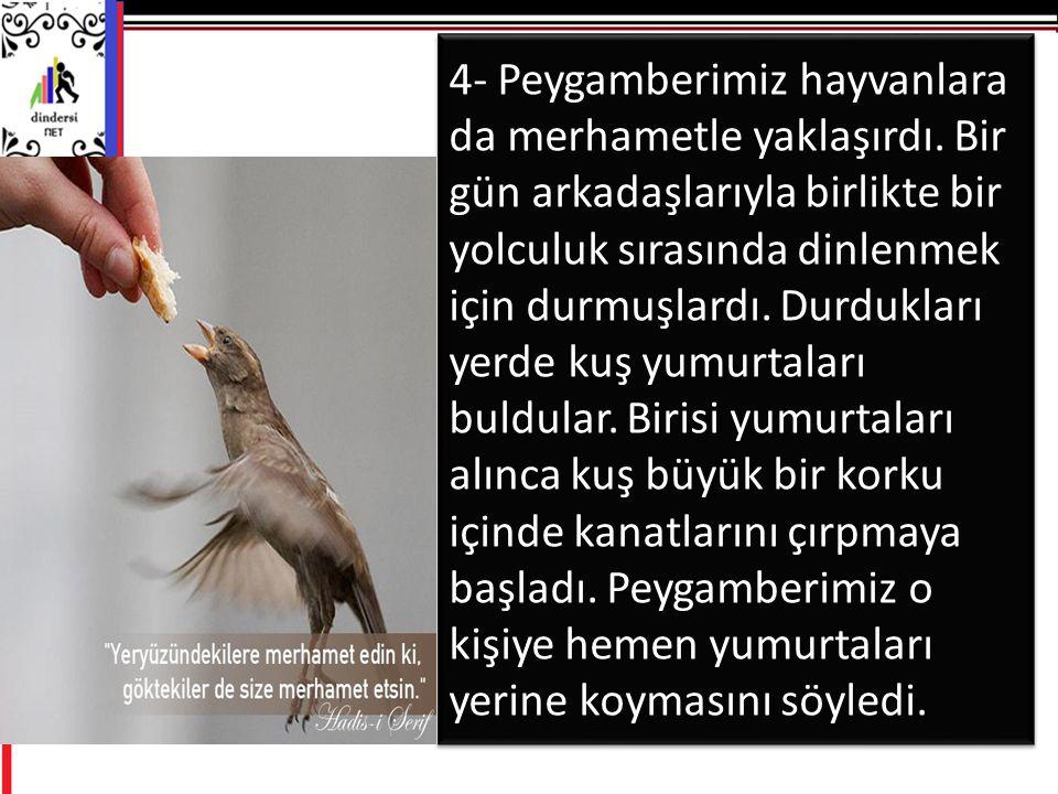 4- Peygamberimiz hayvanlara da merhametle yaklaşırdı.