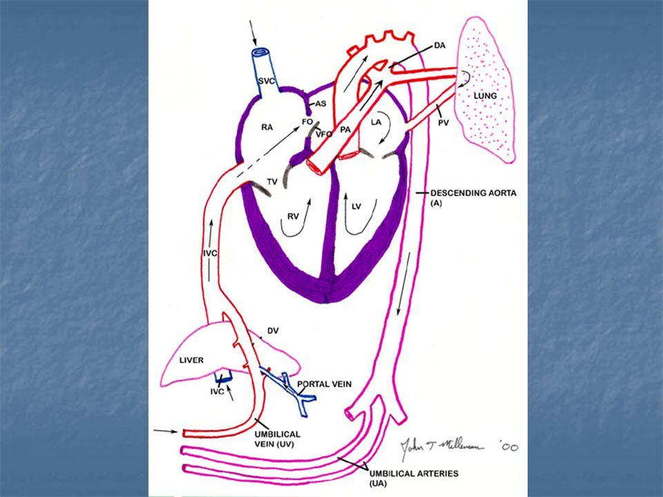 Dolaşımlar arası karışım miktarı ve pulmoner/sistemik akım oranı hastanın klinik ağırlığını belirler.