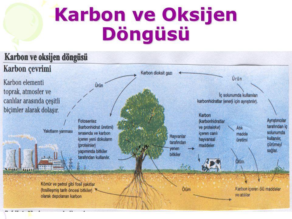 Karbon ve Oksijen Döngüsü