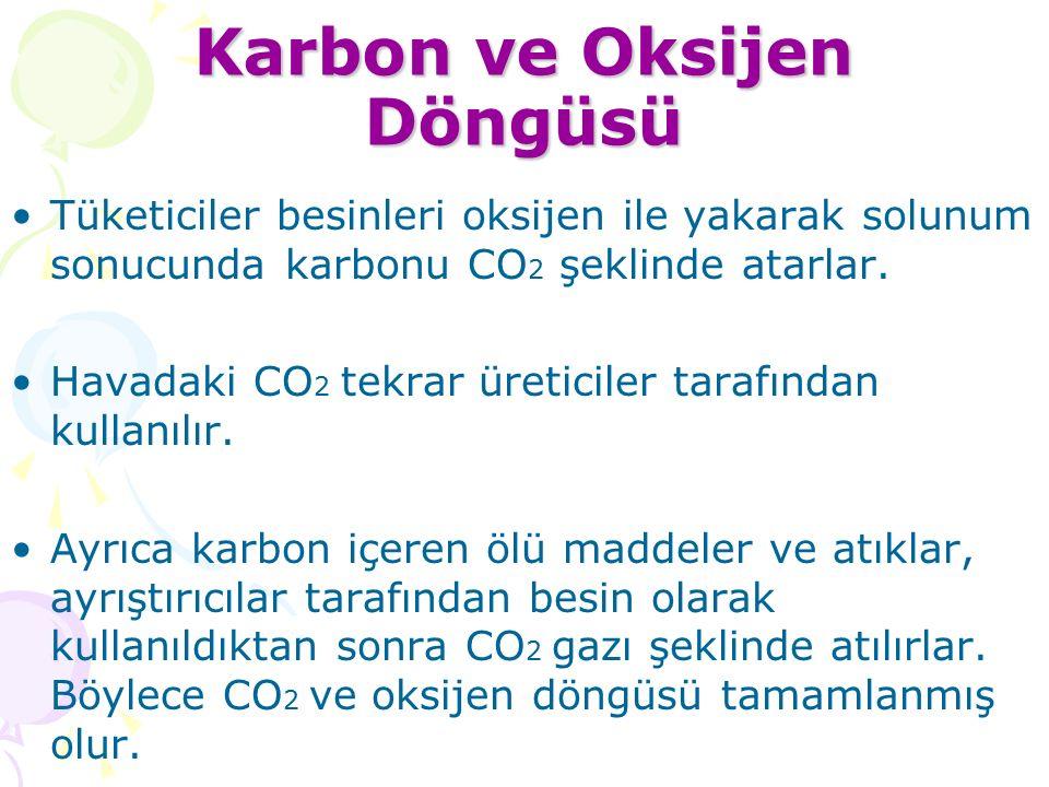 Karbon ve Oksijen Döngüsü Tüketiciler besinleri oksijen ile yakarak solunum sonucunda karbonu CO 2 şeklinde atarlar.