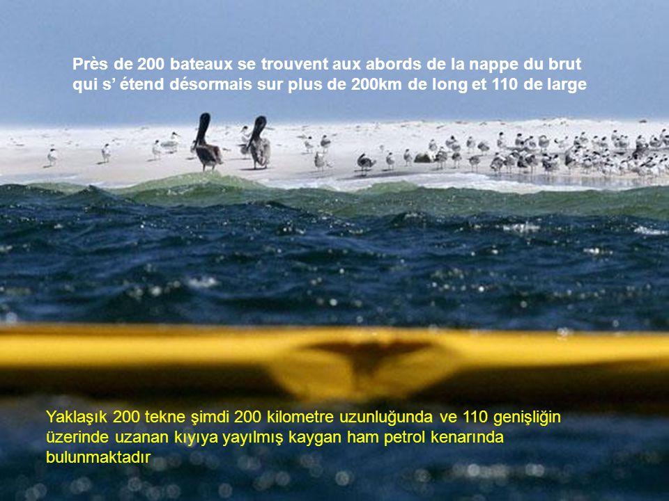•Les marais côtiers de la Louisiane constituent un sanctuaire pour la faune, en particulier les oiseaux aquatiques. la nappe ne pollue les pêcheries,