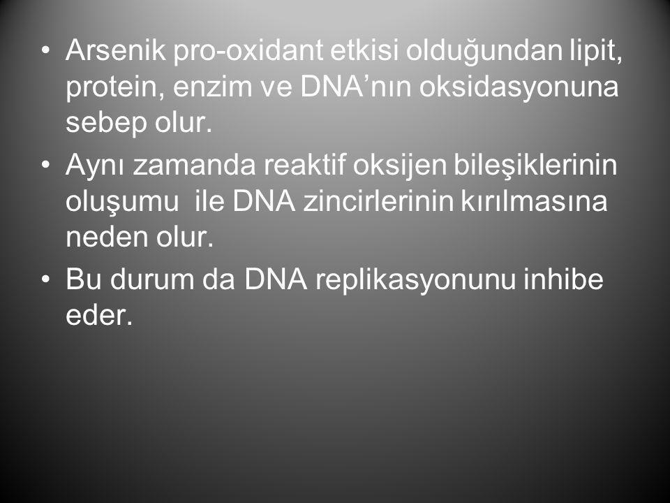 •Arsenik pro-oxidant etkisi olduğundan lipit, protein, enzim ve DNA'nın oksidasyonuna sebep olur. •Aynı zamanda reaktif oksijen bileşiklerinin oluşumu