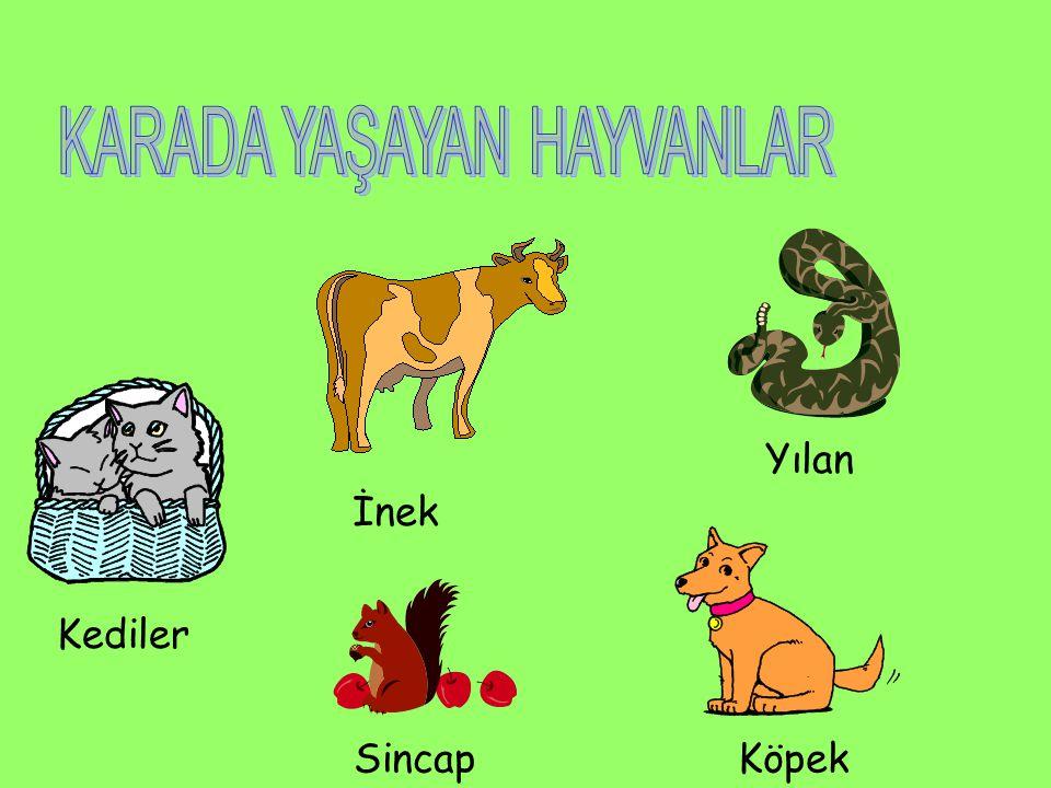 Aşağıdaki hayvanlardan hangisi suda yaşar?