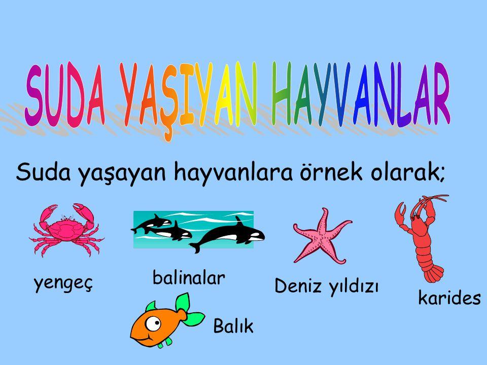 Suda yaşayan hayvanlara örnek olarak; yengeç balinalar Deniz yıldızı karides Balık