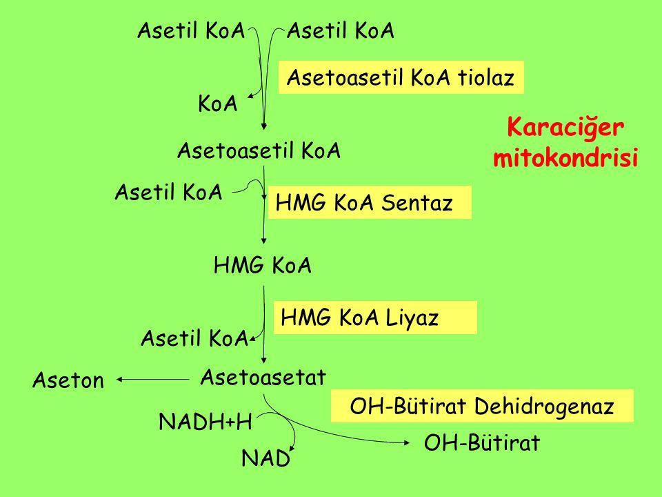 Asetil KoA KoA Asetoasetil KoA Asetoasetil KoA tiolaz Karaciğer mitokondrisi Asetil KoA HMG KoA HMG KoA Sentaz HMG KoA Liyaz Asetil KoA Asetoasetat OH-Bütirat Aseton NAD NADH+H OH-Bütirat Dehidrogenaz