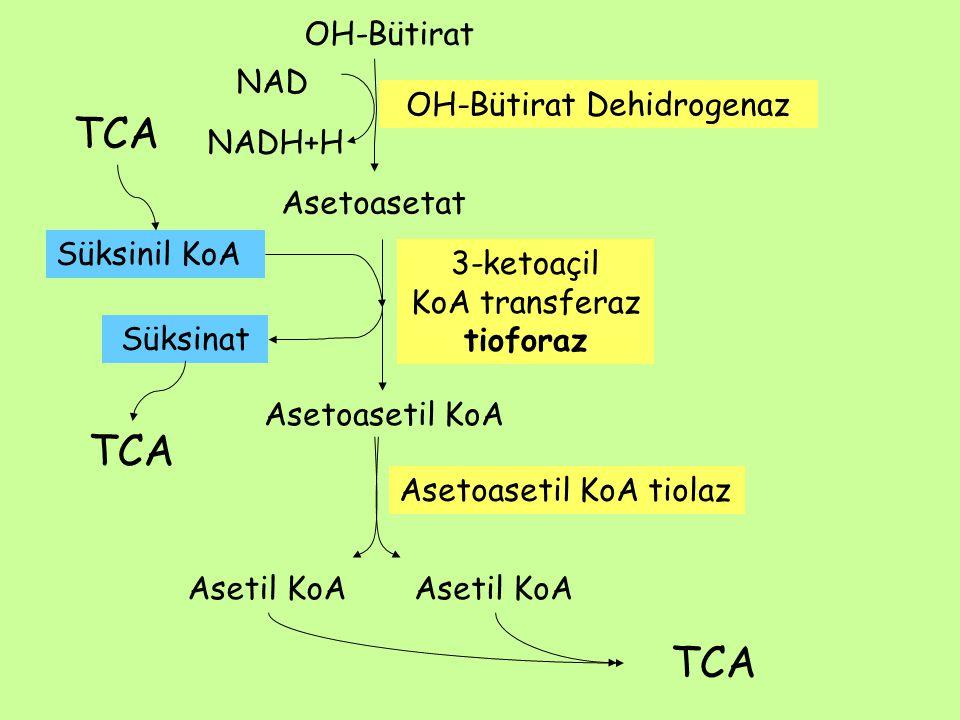 Asetil KoA Asetoasetil KoA Asetoasetil KoA tiolaz Süksinil KoA 3-ketoaçil KoA transferaz tioforaz Asetil KoA Asetoasetat OH-Bütirat NAD NADH+H OH-Bütirat Dehidrogenaz Süksinat TCA