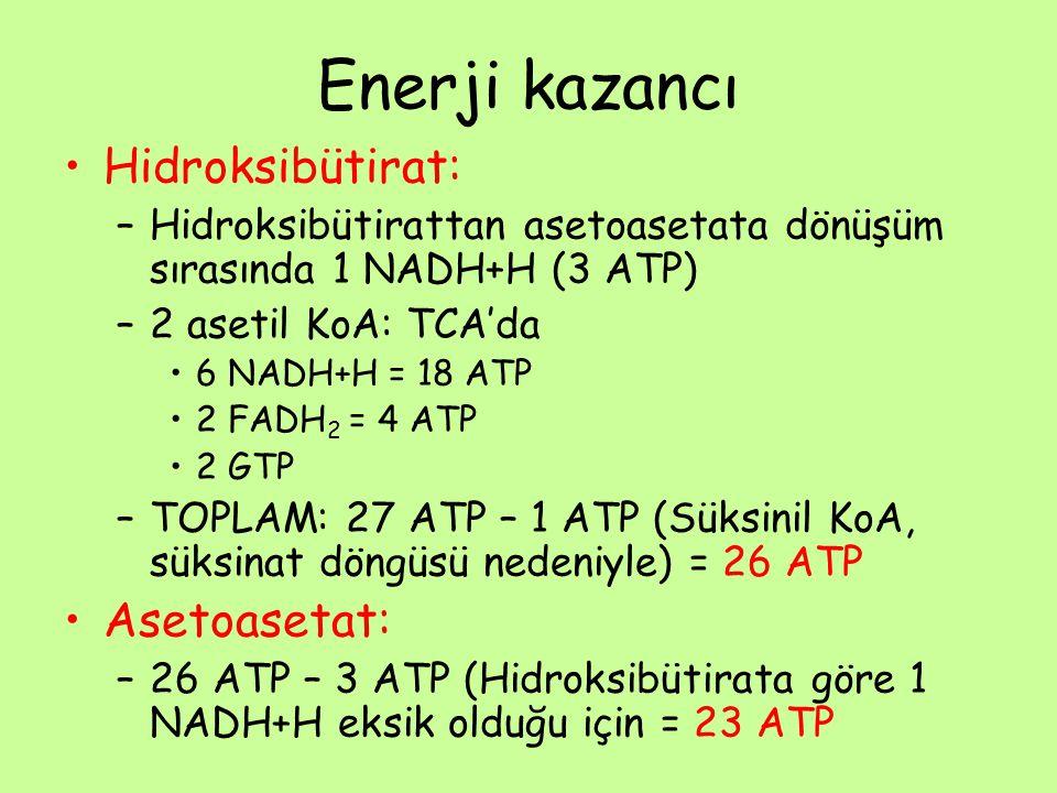 Enerji kazancı •Hidroksibütirat: –Hidroksibütirattan asetoasetata dönüşüm sırasında 1 NADH+H (3 ATP) –2 asetil KoA: TCA'da •6 NADH+H = 18 ATP •2 FADH 2 = 4 ATP •2 GTP –TOPLAM: 27 ATP – 1 ATP (Süksinil KoA, süksinat döngüsü nedeniyle) = 26 ATP •Asetoasetat: –26 ATP – 3 ATP (Hidroksibütirata göre 1 NADH+H eksik olduğu için = 23 ATP