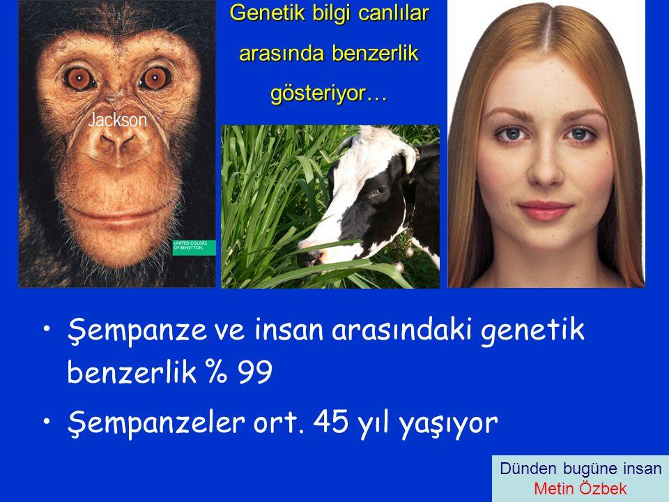 Genetik bilgi canlılar arasında benzerlik gösteriyor… •Şempanze ve insan arasındaki genetik benzerlik % 99 •Şempanzeler ort.