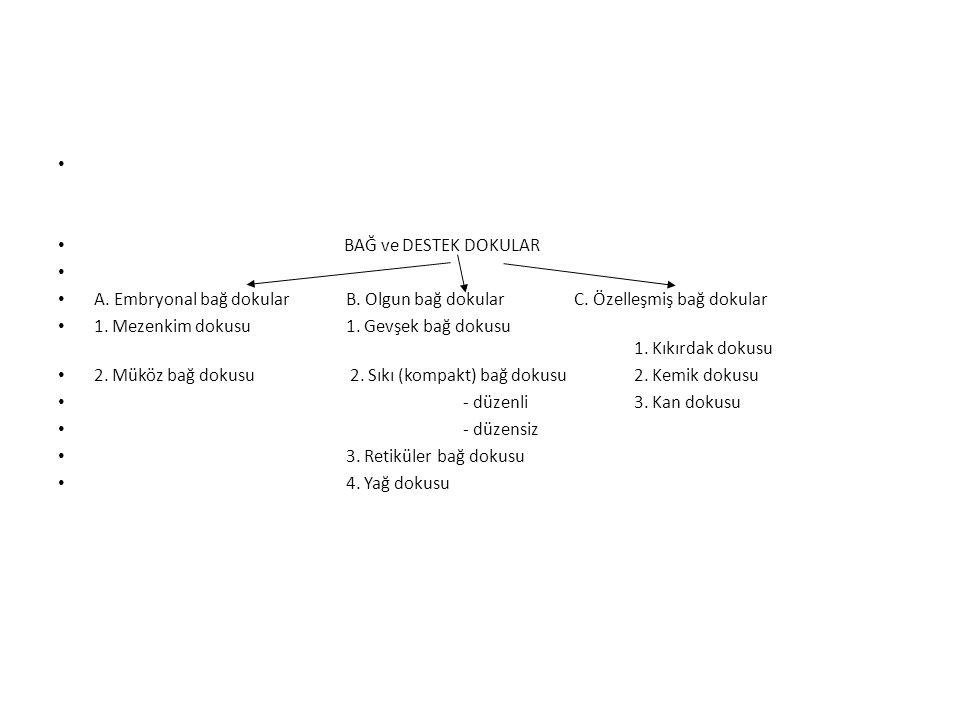 • • BAĞ ve DESTEK DOKULAR • • A. Embryonal bağ dokularB. Olgun bağ dokular C. Özelleşmiş bağ dokular • 1. Mezenkim dokusu1. Gevşek bağ dokusu 1. Kıkır