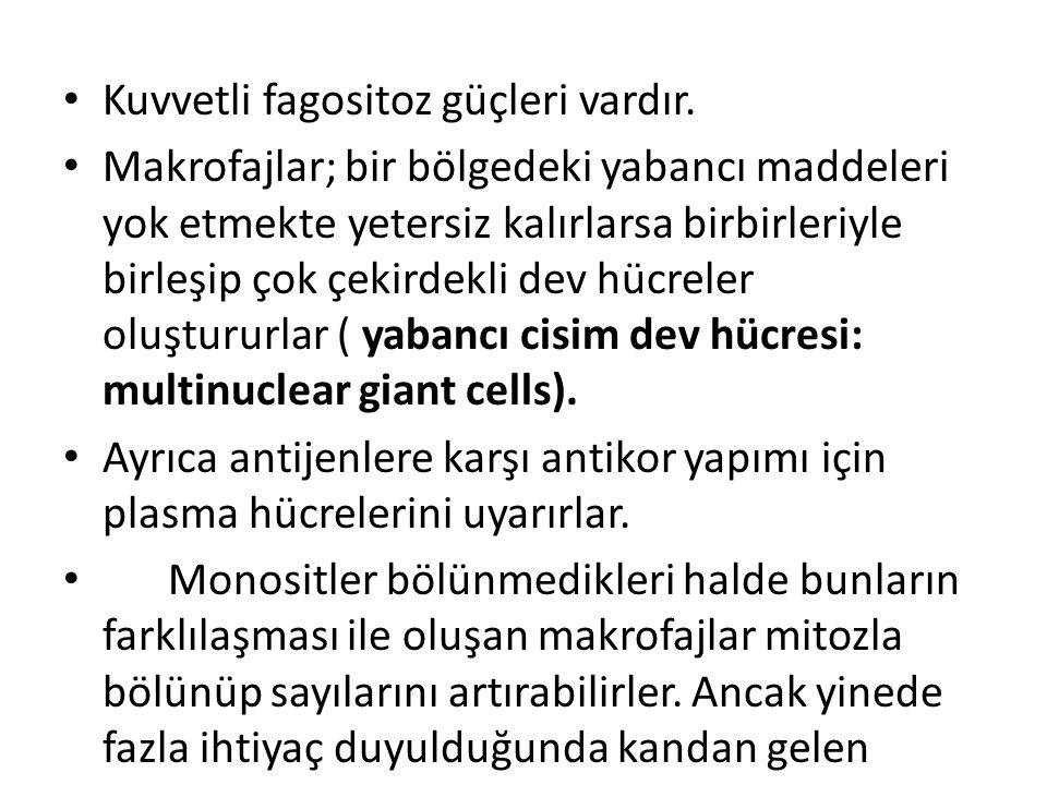 • Kuvvetli fagositoz güçleri vardır. • Makrofajlar; bir bölgedeki yabancı maddeleri yok etmekte yetersiz kalırlarsa birbirleriyle birleşip çok çekirde