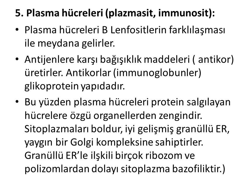 5. Plasma hücreleri (plazmasit, immunosit): • Plasma hücreleri B Lenfositlerin farklılaşması ile meydana gelirler. • Antijenlere karşı bağışıklık madd