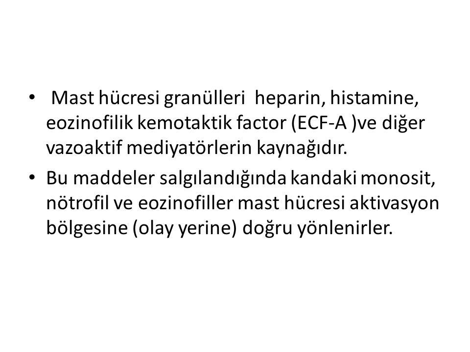 • Mast hücresi granülleri heparin, histamine, eozinofilik kemotaktik factor (ECF-A )ve diğer vazoaktif mediyatörlerin kaynağıdır. • Bu maddeler salgıl