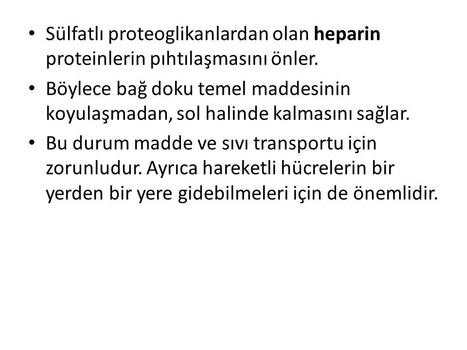 • Sülfatlı proteoglikanlardan olan heparin proteinlerin pıhtılaşmasını önler. • Böylece bağ doku temel maddesinin koyulaşmadan, sol halinde kalmasını
