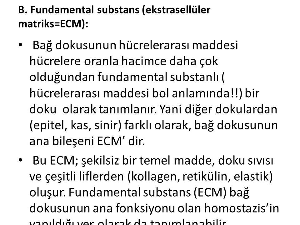 B. Fundamental substans (ekstrasellüler matriks=ECM): • Bağ dokusunun hücrelerarası maddesi hücrelere oranla hacimce daha çok olduğundan fundamental s