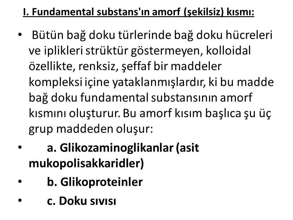 I. Fundamental substans'ın amorf (şekilsiz) kısmı: • Bütün bağ doku türlerinde bağ doku hücreleri ve iplikleri strüktür göstermeyen, kolloidal özellik