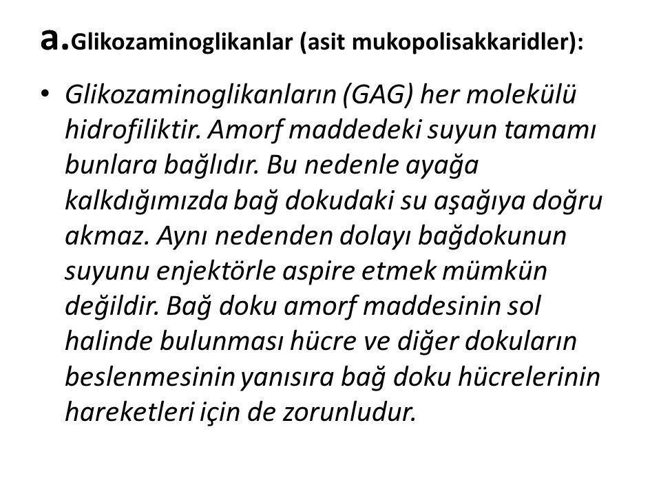a. Glikozaminoglikanlar (asit mukopolisakkaridler): • Glikozaminoglikanların (GAG) her molekülü hidrofiliktir. Amorf maddedeki suyun tamamı bunlara ba