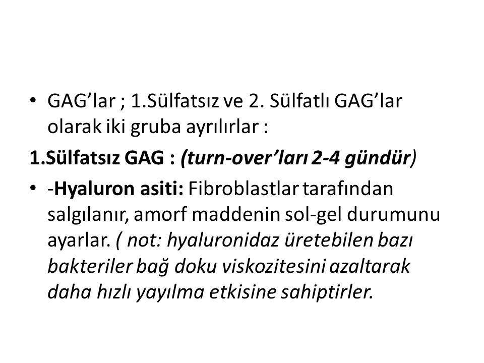 • GAG'lar ; 1.Sülfatsız ve 2. Sülfatlı GAG'lar olarak iki gruba ayrılırlar : 1.Sülfatsız GAG : (turn-over'ları 2-4 gündür) • -Hyaluron asiti: Fibrobla