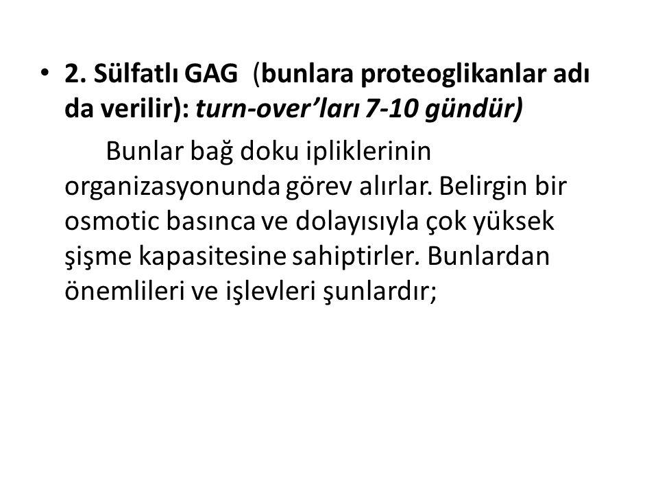• 2. Sülfatlı GAG (bunlara proteoglikanlar adı da verilir): turn-over'ları 7-10 gündür) Bunlar bağ doku ipliklerinin organizasyonunda görev alırlar. B