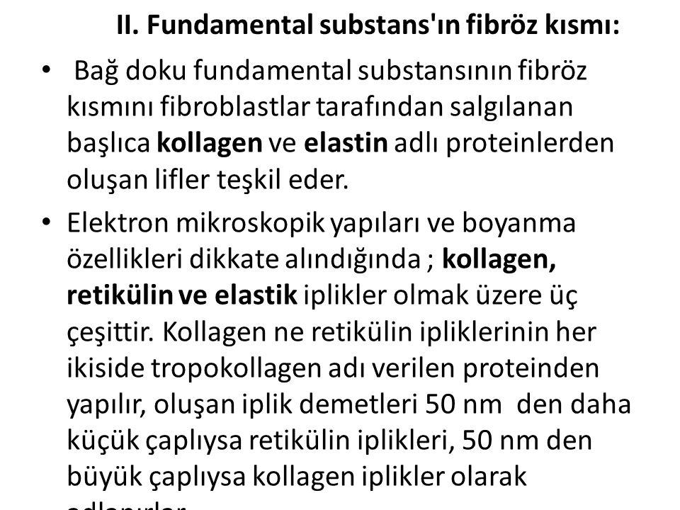 II. Fundamental substans'ın fibröz kısmı: • Bağ doku fundamental substansının fibröz kısmını fibroblastlar tarafından salgılanan başlıca kollagen ve e