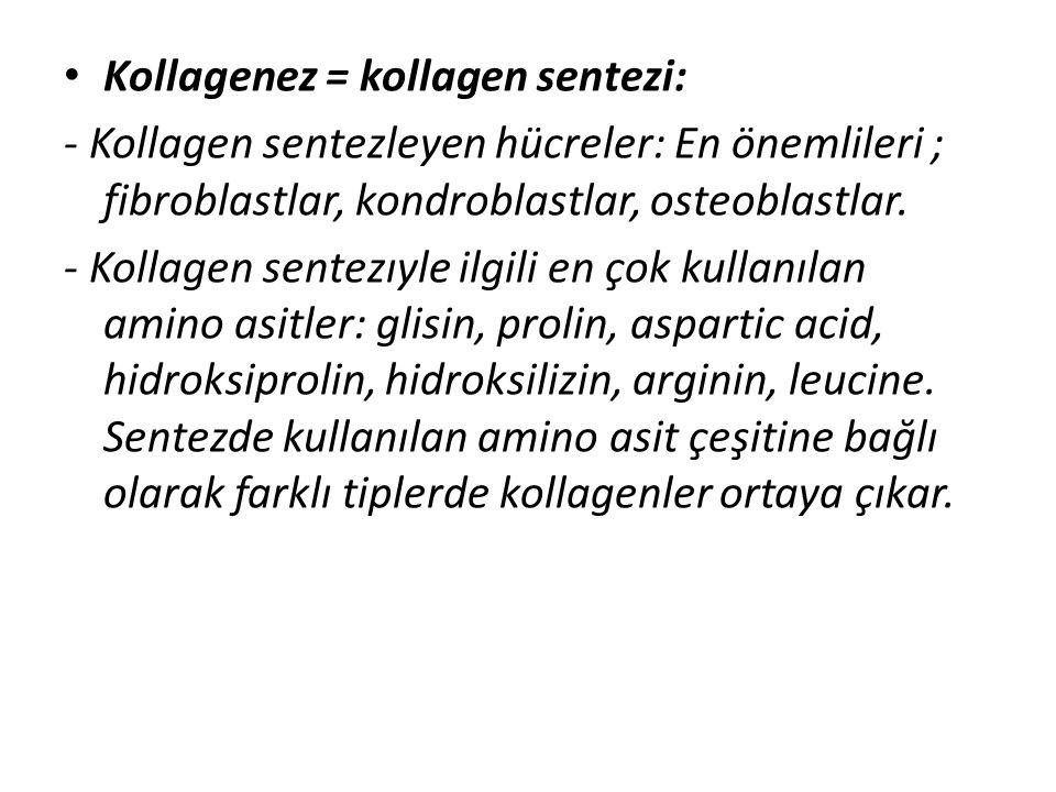 • Kollagenez = kollagen sentezi: - Kollagen sentezleyen hücreler: En önemlileri ; fibroblastlar, kondroblastlar, osteoblastlar. - Kollagen sentezıyle