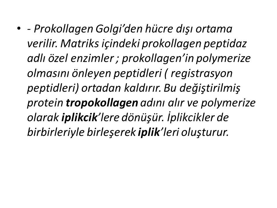 • - Prokollagen Golgi'den hücre dışı ortama verilir. Matriks içindeki prokollagen peptidaz adlı özel enzimler ; prokollagen'in polymerize olmasını önl