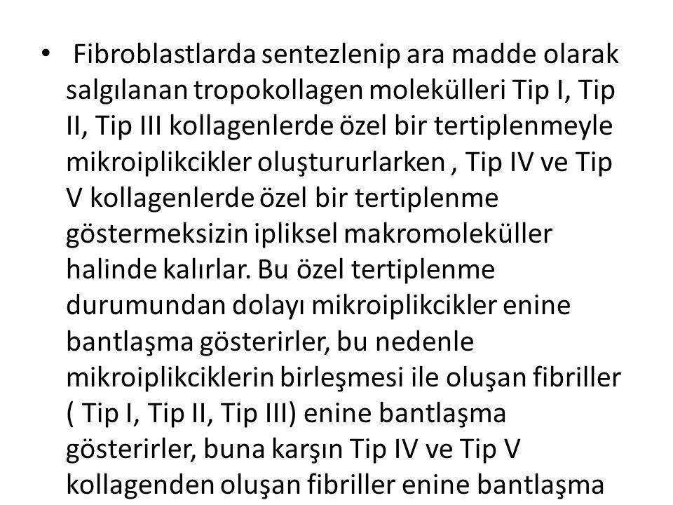 • Fibroblastlarda sentezlenip ara madde olarak salgılanan tropokollagen molekülleri Tip I, Tip II, Tip III kollagenlerde özel bir tertiplenmeyle mikro
