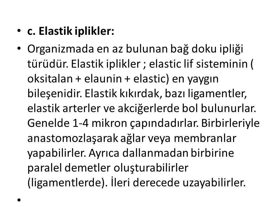 • c. Elastik iplikler: • Organizmada en az bulunan bağ doku ipliği türüdür. Elastik iplikler ; elastic lif sisteminin ( oksitalan + elaunin + elastic)