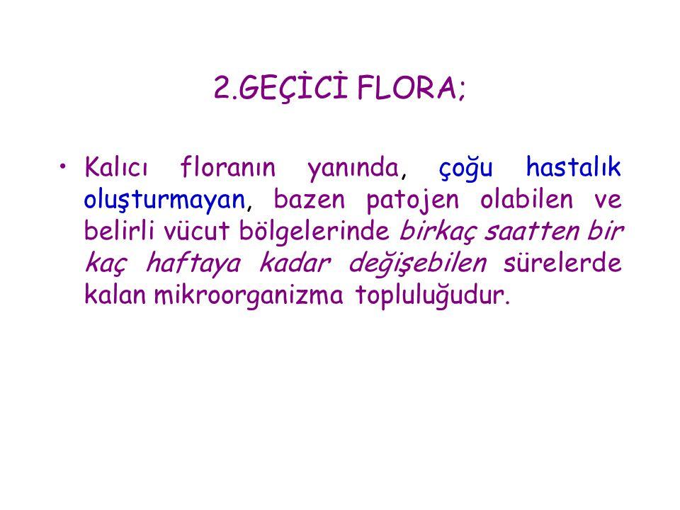 2.GEÇİCİ FLORA; •Kalıcı floranın yanında, çoğu hastalık oluşturmayan, bazen patojen olabilen ve belirli vücut bölgelerinde birkaç saatten bir kaç haft
