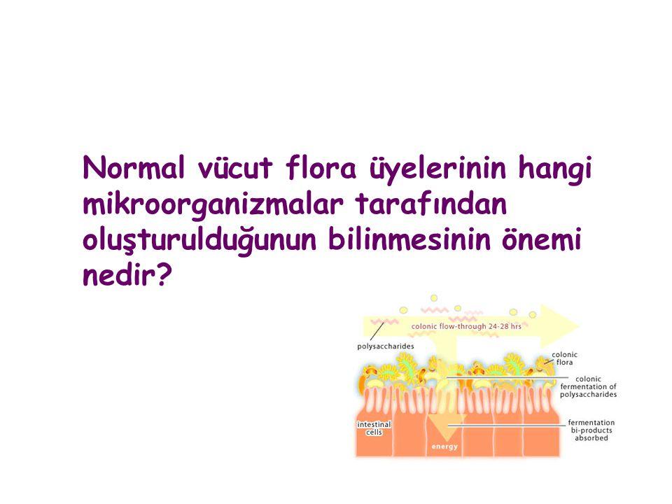 Normal vücut flora üyelerinin hangi mikroorganizmalar tarafından oluşturulduğunun bilinmesinin önemi nedir?