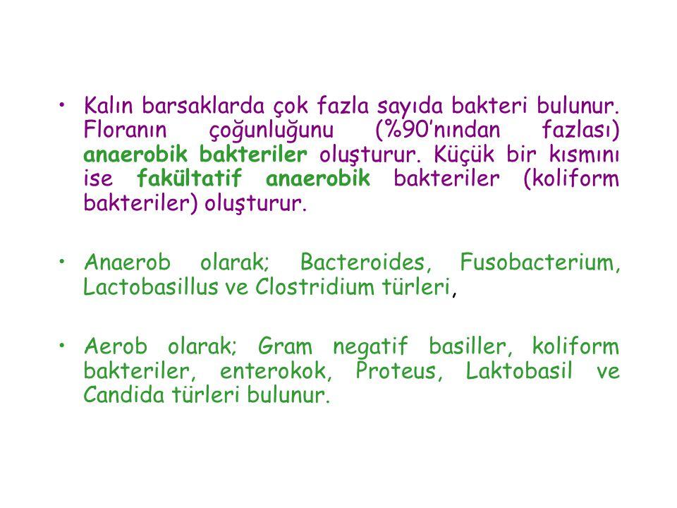 •Kalın barsaklarda çok fazla sayıda bakteri bulunur. Floranın çoğunluğunu (%90'nından fazlası) anaerobik bakteriler oluşturur. Küçük bir kısmını ise f