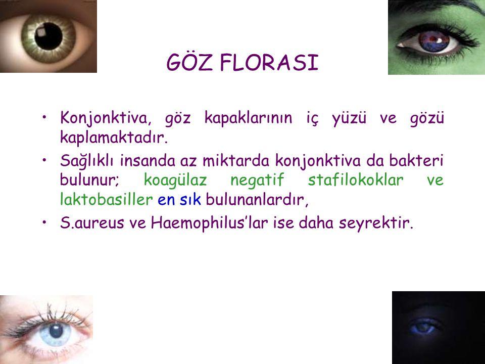 GÖZ FLORASI •Konjonktiva, göz kapaklarının iç yüzü ve gözü kaplamaktadır. •Sağlıklı insanda az miktarda konjonktiva da bakteri bulunur; koagülaz negat