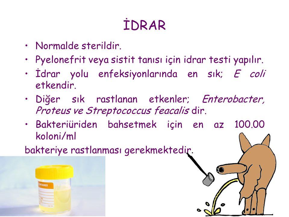 İDRAR •Normalde sterildir. •Pyelonefrit veya sistit tanısı için idrar testi yapılır. •İdrar yolu enfeksiyonlarında en sık; E coli etkendir. •Diğer sık