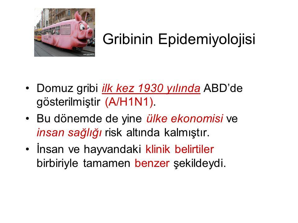 Gribinin Epidemiyolojisi •Domuz gribi ilk kez 1930 yılında ABD'de gösterilmiştir (A/H1N1). •Bu dönemde de yine ülke ekonomisi ve insan sağlığı risk al