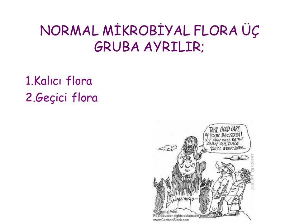 NORMAL MİKROBİYAL FLORA ÜÇ GRUBA AYRILIR; 1.Kalıcı flora 2.Geçici flora