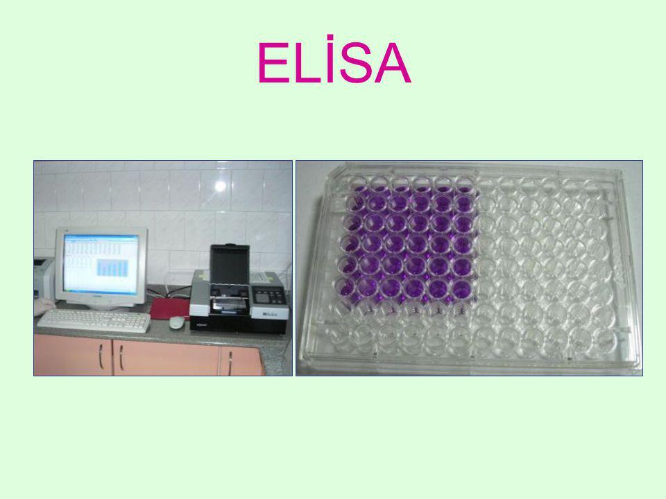 ELİSA