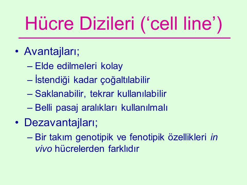 Hücre Dizileri ('cell line') •Avantajları; –Elde edilmeleri kolay –İstendiği kadar çoğaltılabilir –Saklanabilir, tekrar kullanılabilir –Belli pasaj aralıkları kullanılmalı •Dezavantajları; –Bir takım genotipik ve fenotipik özellikleri in vivo hücrelerden farklıdır