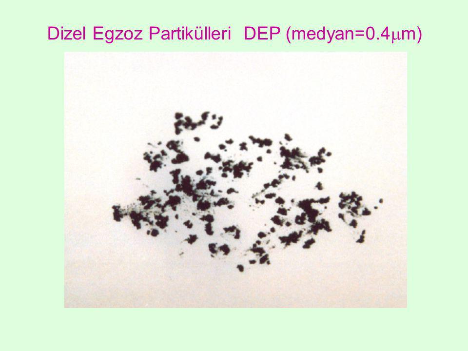 Dizel Egzoz Partikülleri DEP (medyan=0.4  m)