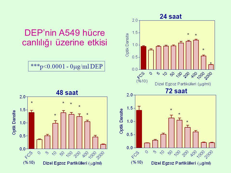 DEP'nin A549 hücre canlılığı üzerine etkisi 24 saat ***p<0.0001 - 0  g/ml DEP 72 saat 48 saat