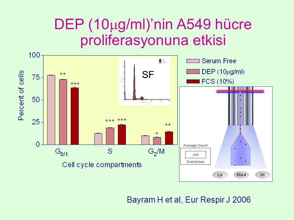 DEP (10  g/ml)'nin A549 hücre proliferasyonuna etkisi SF Bayram H et al, Eur Respir J 2006