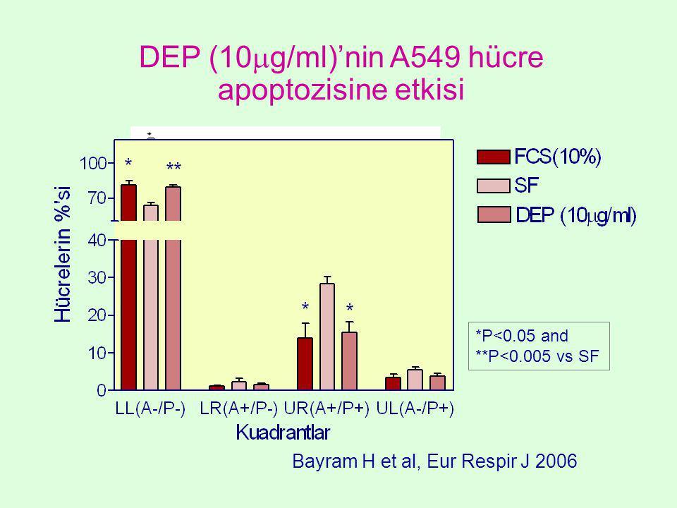 SF *P<0.05 and **P<0.005 vs SF DEP (10  g/ml)'nin A549 hücre apoptozisine etkisi Bayram H et al, Eur Respir J 2006