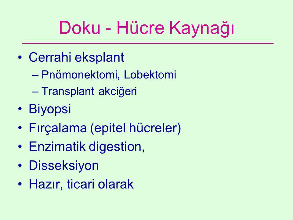 Doku - Hücre Kaynağı •Cerrahi eksplant –Pnömonektomi, Lobektomi –Transplant akciğeri •Biyopsi •Fırçalama (epitel hücreler) •Enzimatik digestion, •Disseksiyon •Hazır, ticari olarak