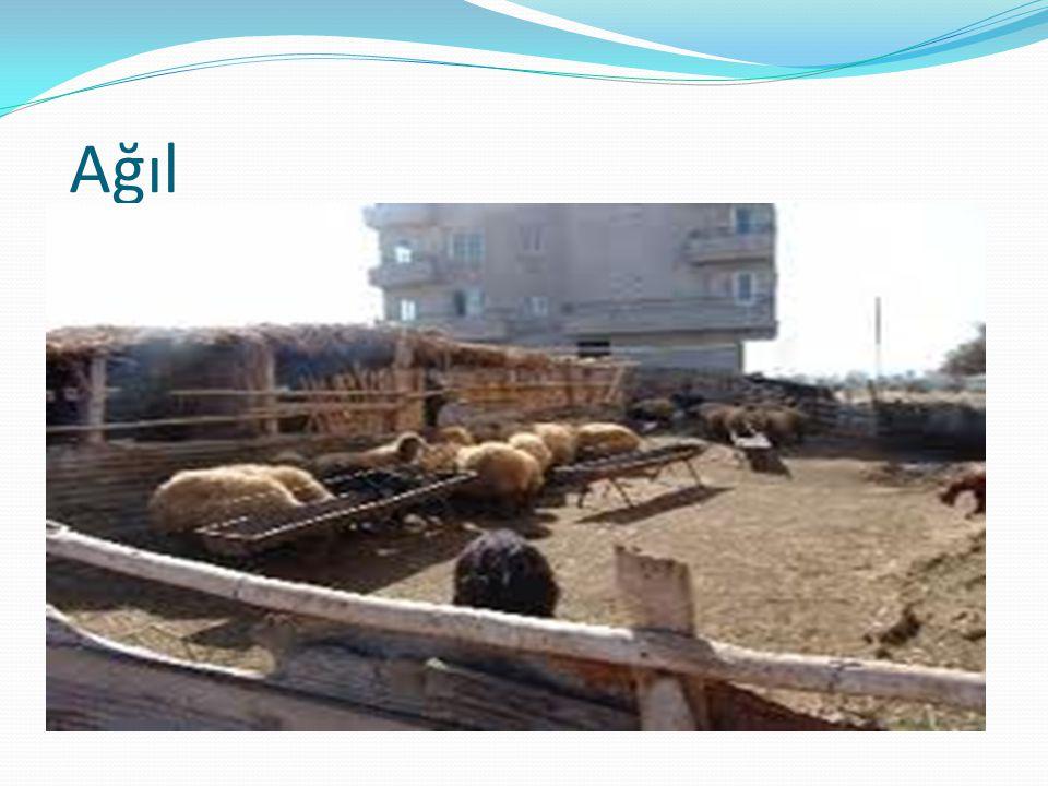  Kom Genellikle hayvancılık yapmak için kullanılır.