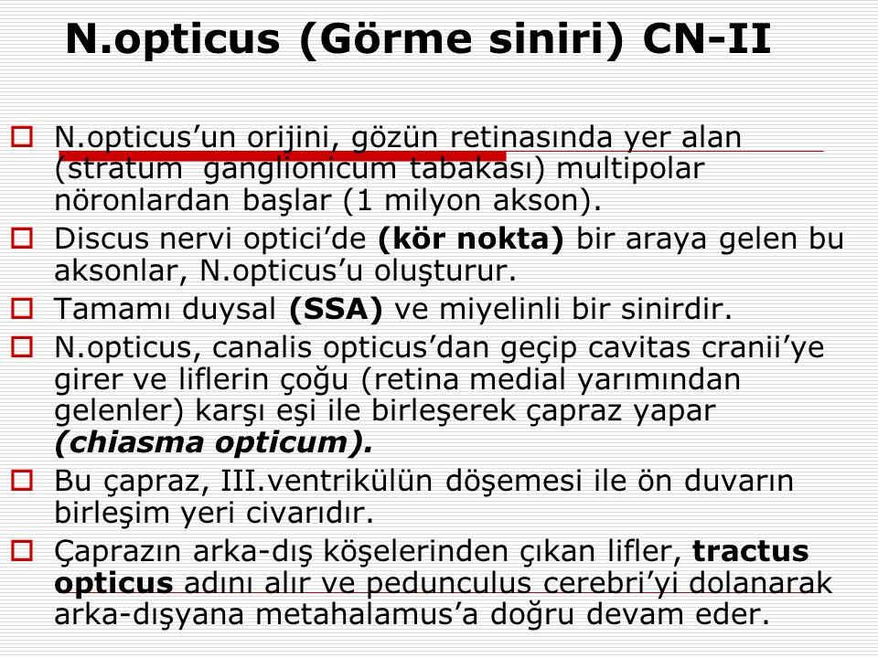 N.opticus (Görme siniri) CN-II  N.opticus'un orijini, gözün retinasında yer alan (stratum ganglionicum tabakası) multipolar nöronlardan başlar (1 mil