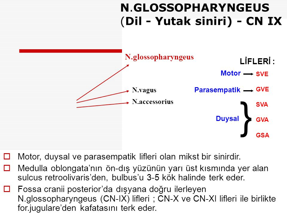 N.vagus N.GLOSSOPHARYNGEUS (Dil - Yutak siniri) - CN IX N.glossopharyngeus N.accessorius  Motor, duysal ve parasempatik lifleri olan mikst bir sinird