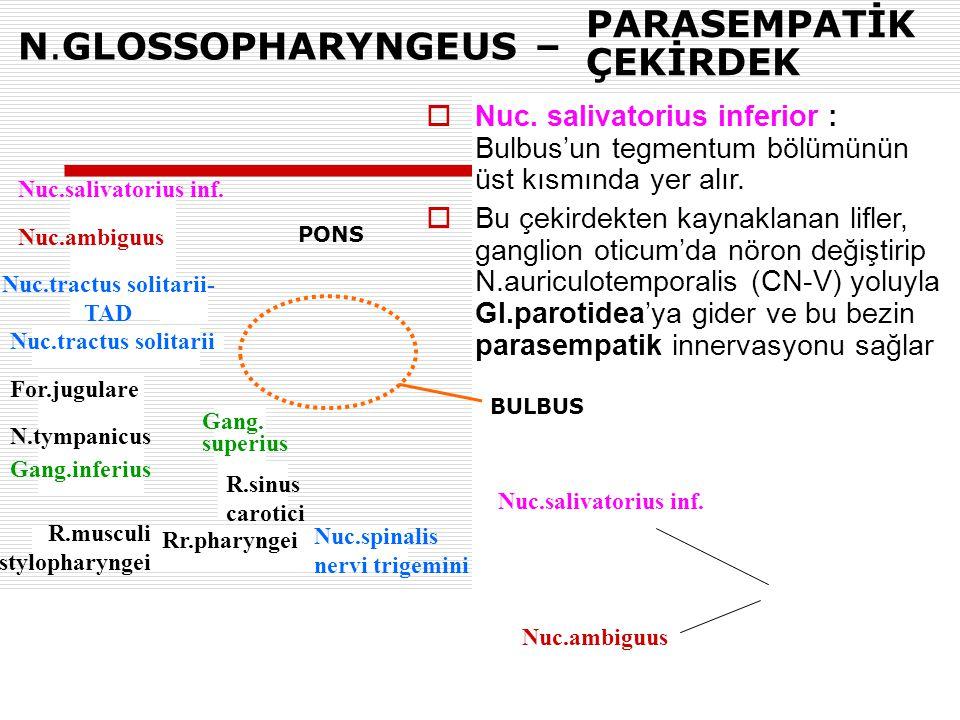 N.GLOSSOPHARYNGEUS – Nuc.salivatorius inf. Nuc.ambiguus Nuc.tractus solitarii- TAD Nuc.tractus solitarii For.jugulare N.tympanicus Gang.inferius Gang.