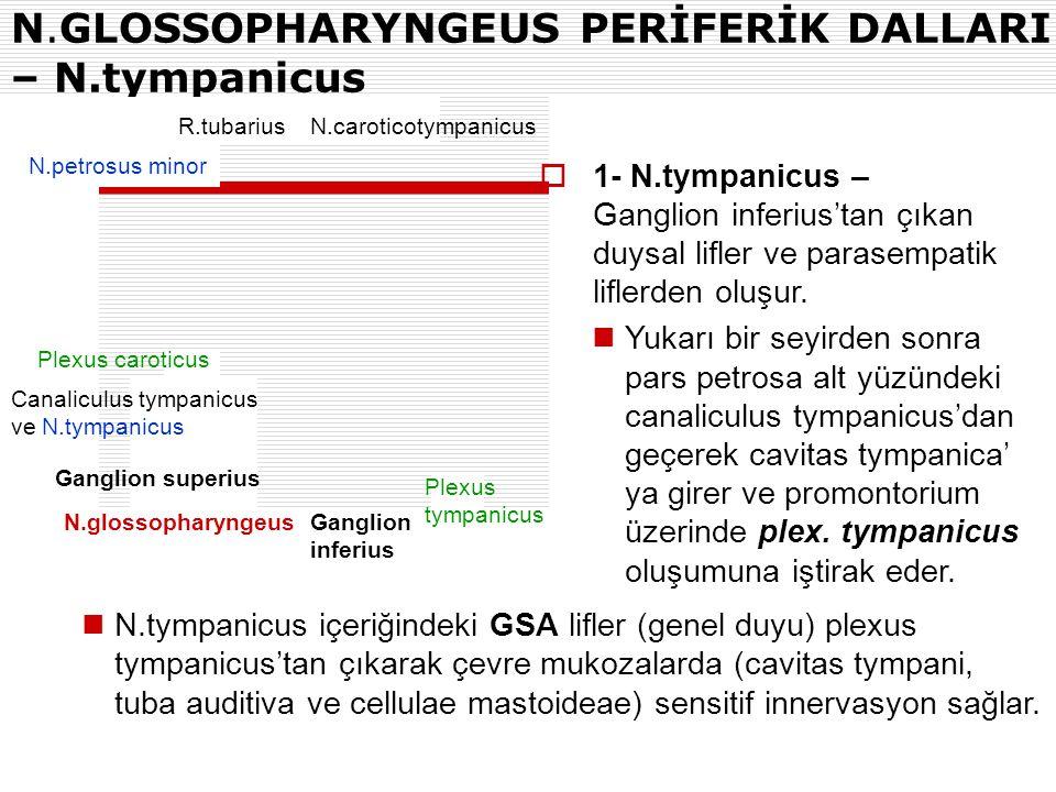 N.GLOSSOPHARYNGEUS PERİFERİK DALLARI – N.tympanicus N.caroticotympanicusR.tubarius N.petrosus minor Plexus caroticus Canaliculus tympanicus ve N.tympa