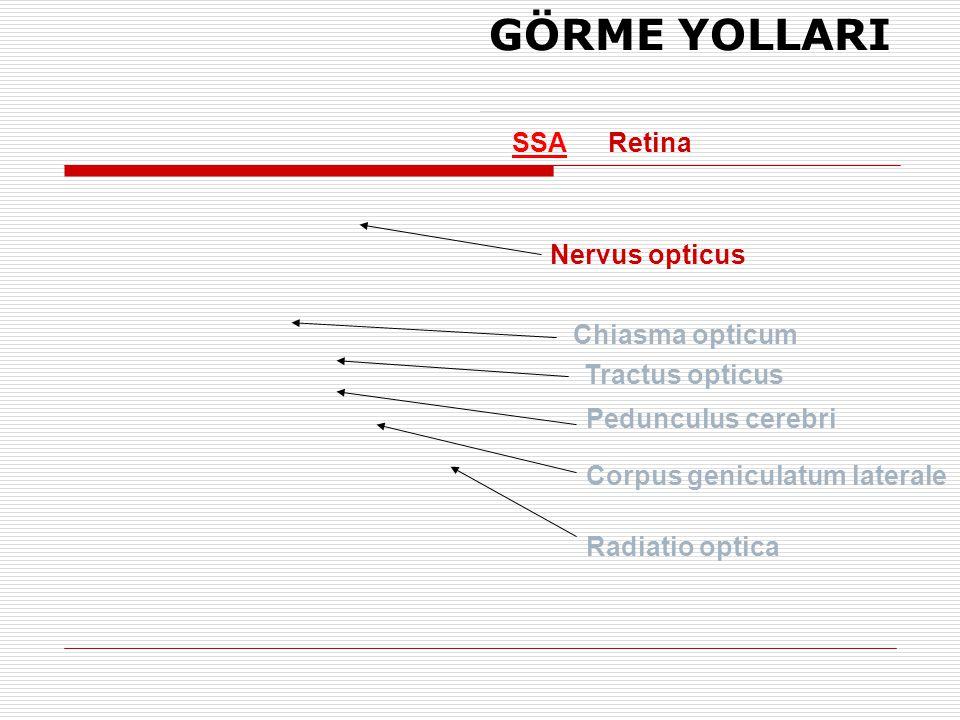 SSARetina Nervus opticus Chiasma opticum Tractus opticus Radiatio optica GÖRME YOLLARI Pedunculus cerebri Corpus geniculatum laterale