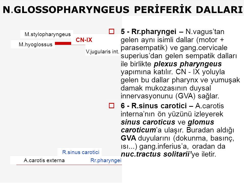 N.GLOSSOPHARYNGEUS PERİFERİK DALLARI M.stylopharyngeus M.hyoglossus R.sinus carotici Rr.pharyngeiA.carotis externa V.jugularis int. CN-IX  5 - Rr.pha